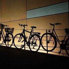Bikes in Berlin by Martin Vanek - Transportation Bicycles ( backlight, bikes, shadow, silhouette, berlin )