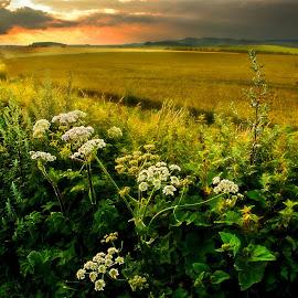 by Jack Hardin - Landscapes Prairies, Meadows & Fields ( field, meadow, summer, wiltshire, landscape )
