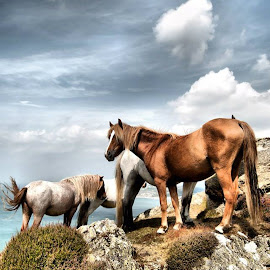 by Einir Leigh - Animals Horses