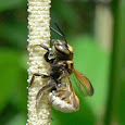 Pollinating Insects of the World