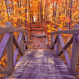 Bridge to Fall Fantasy by Nicolas Raymond - Buildings & Architecture Bridges & Suspended Structures ( to, mont-orford, wood, architecture, yellow, glow, leaves, colourful, nature, passage, autumn, foliage, trail, bursting, surreal, orange, structure, starburst, canada, colors, burst, forest, steps, colours, passageway, sunburst, quebec, trees, scene, bridge, colorful, mount orford, mont orford, landscape, sun, fantasy, stairs, sunny, path, park, hdr, purple, scenic, woods, wooden, red, fall, violet, glowing, scenery,  )