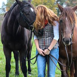 by Kimberly Dean - Animals Horses