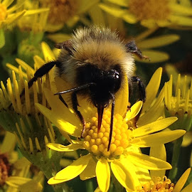 Bee happy by Lorna Stirling - Novices Only Flowers & Plants