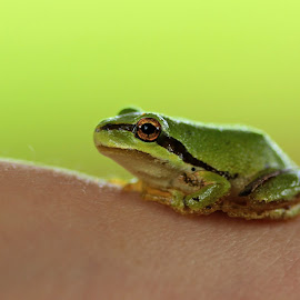 Calloway's new friend by Bob Ward - Animals Amphibians