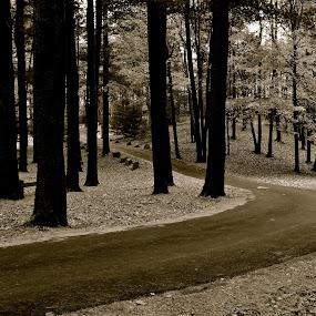 Sleeping Giant Park by Carl Testo - Black & White Landscapes ( autumn, black and white, sleeping giant, forest, road )