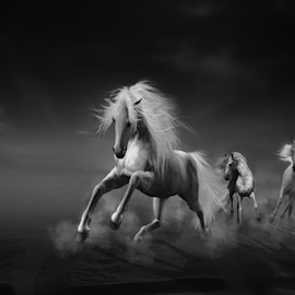 I dreamed of a white horse by Che Abu Bakar Che Said - Digital Art Animals