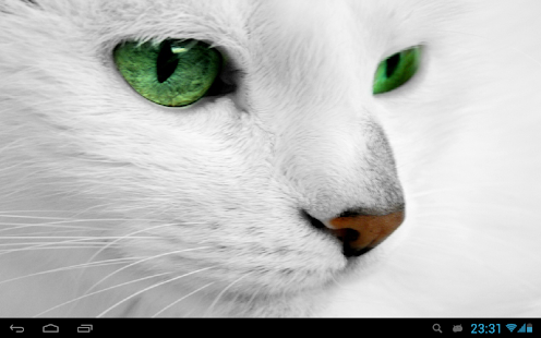 Download White Cats Live Wallpaper APK on PC | Download ...