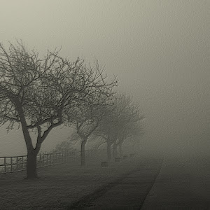 foggy_bike_trail_by_coorslite-d4ychjt.jpg
