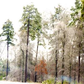 winter wonderland by Elizabeth L-Crall - Nature Up Close Trees & Bushes ( winter, nature, snowstorm, digital art, snow, trees, landscape,  )