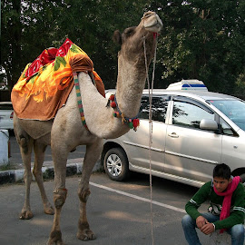 by Rupinder Chahal - Transportation Other
