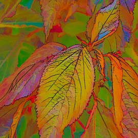 Leaves by Jay Gould - Digital Art Things ( digital air, colorful, topaz simplify, colorful leaves, leaves )