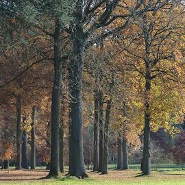 by Michael de Schacht - Nature Up Close Trees & Bushes