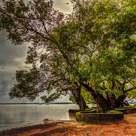 Trees in Shonbill by Manabendra Dey - Landscapes Prairies, Meadows & Fields ( wetland, shonbill, trees, largest wetland in asia )