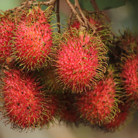 My Red Rambutan by Syahrul Nizam Abdullah - Food & Drink Fruits & Vegetables