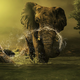 Mandi dan bermain bersama Gajah (Happy fun with a elephant) by Juprinaldi Photoart - Digital Art Animals ( girl    forest   water, elephant )