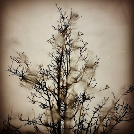& by Todd Reynolds - Instagram & Mobile Android ( rain, tree )