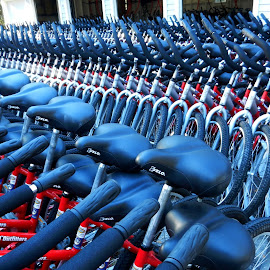 Bikes for Rent by Kathy Rose Willis - Transportation Bicycles ( red, pattern, rentals, bikes, blue, tires, handlebars, white, seats,  )