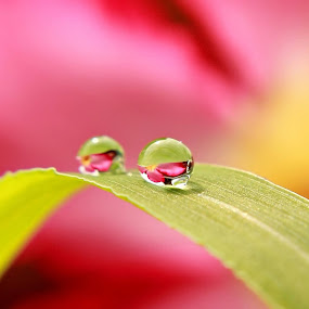 by Ribut Bagus - Nature Up Close Natural Waterdrops