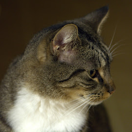 by Terry Hairston - Animals - Cats Portraits