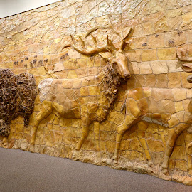 Carved Wall at Wildlife Refuge by Kathy Suttles - Buildings & Architecture Statues & Monuments