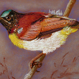 Purple Rumped Sunbird by Artica Arta - Painting All Painting ( bird, pastel, painting,  )