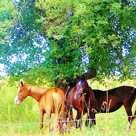 In the shade of the old apple tree by Delores Mills - Animals Horses (  )