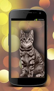 Animal Camera Photo Montage - screenshot
