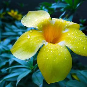 Tiny drops of waters  by Saurabh Gaikwad - Flowers Single Flower ( dew drops, flower,  )