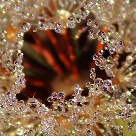 by Frank Gray - Nature Up Close Natural Waterdrops
