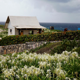 Punta Sur in Bloom by Sherri Reyna - Landscapes Travel ( mexico, travel, caribbean )