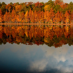 Autumn reflection by Gene Myers - Landscapes Forests ( shotsbygene, reflection, nature, autumn, colors, fall, reflected clouds, trees, lake, landscape, gene myers, , relax, tranquil, relaxing, tranquility )