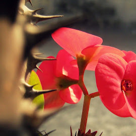 Inner Beauty.. by Swagata Bhowmik - Nature Up Close Gardens & Produce