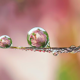 A beautiful mind by Citra Hernadi - Nature Up Close Natural Waterdrops