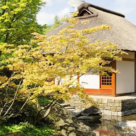 Japanese Garden - Planten un Blomen by Matthäus Rojek - Buildings & Architecture Other Exteriors ( japanese garden - planten un blomen )