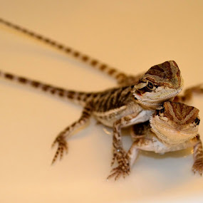 A little under a month old by Jimmy Tuazon - Animals Reptiles