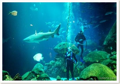 SHARKSCUBA
