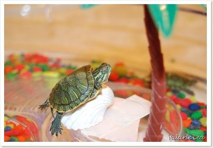 turtle001