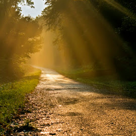 by Siniša Almaši - Landscapes Forests ( tree, nature, color, path, forest, sunray, road, sunlight, landscape, light, woods )
