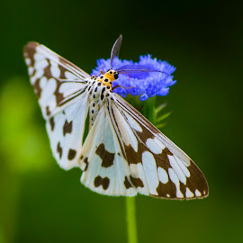 butterfly 3 by Arka Kt - Animals Insects & Spiders (  )