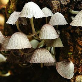 by Jerry Lakburlawal - Nature Up Close Mushrooms & Fungi