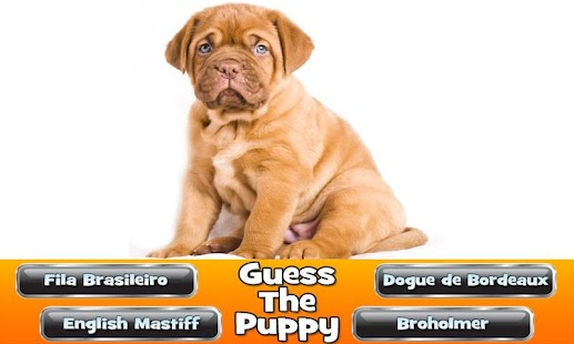 Guess The Puppy 2 Trivia Game - screenshot