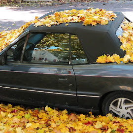 Leaf My Car Be by Dan Dusek - City,  Street & Park  Neighborhoods ( autumn leaves, autumn, automobile, falling leaves, street photography, fall, color, colorful, nature )