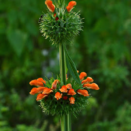 orange & green by Arnab Bhattacharyya - Nature Up Close Other plants