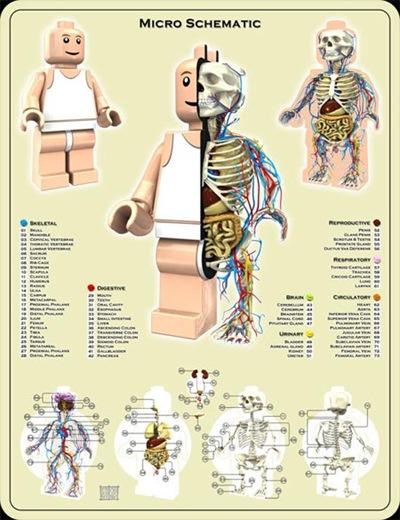 lego_anatomy