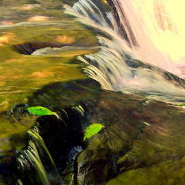 Falls... by Brian Blood - Nature Up Close Water ( water, water flowing, waterfall, leaves, river,  )