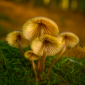 by Peter Samuelsson - Nature Up Close Mushrooms & Fungi