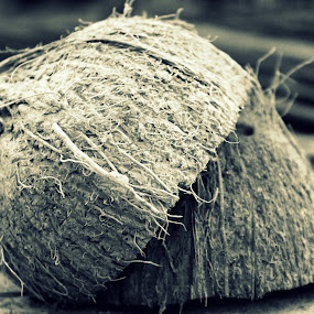 Coconut by Sowmya Beena - Food & Drink Fruits & Vegetables