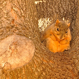 Morning Light by Jim Pruett - Animals Other Mammals ( perched, tree, sunlit, squirrel )