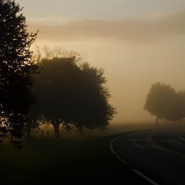 Foggy morning by Valerie Dyer - Landscapes Weather