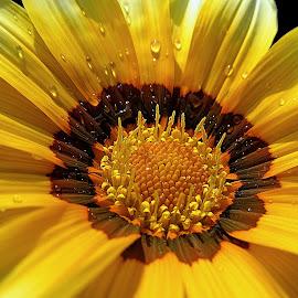 by Soumitra Haldar - Flowers Single Flower